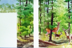beechwood.deer_