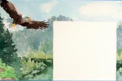 conifer.eagle_