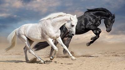 Black Desert Online Horse Skills