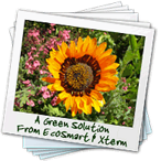 green-solution Austin Green Pest Control