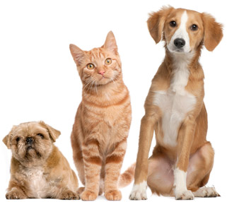 Veterinarian Links Gambrils, Crofton, Ft. Meade, Odenton, Bowie | Prime Care Animal Hospital