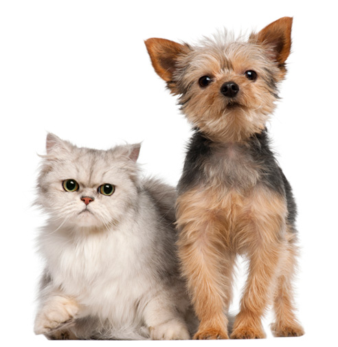 Veterinarian Specials Gambrils, Crofton, Ft. Meade, Odenton, Bowie | Prime Care Animal Hospital