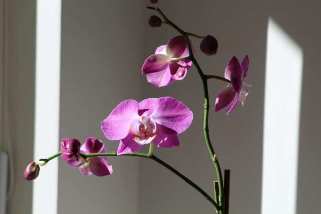 modern kitchen decor with orchids