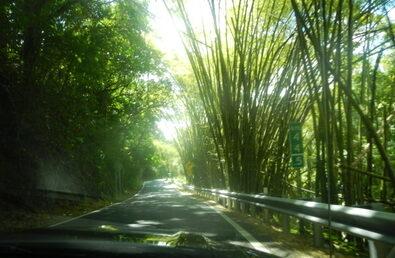 Puerto Rico Rain Forest Tour