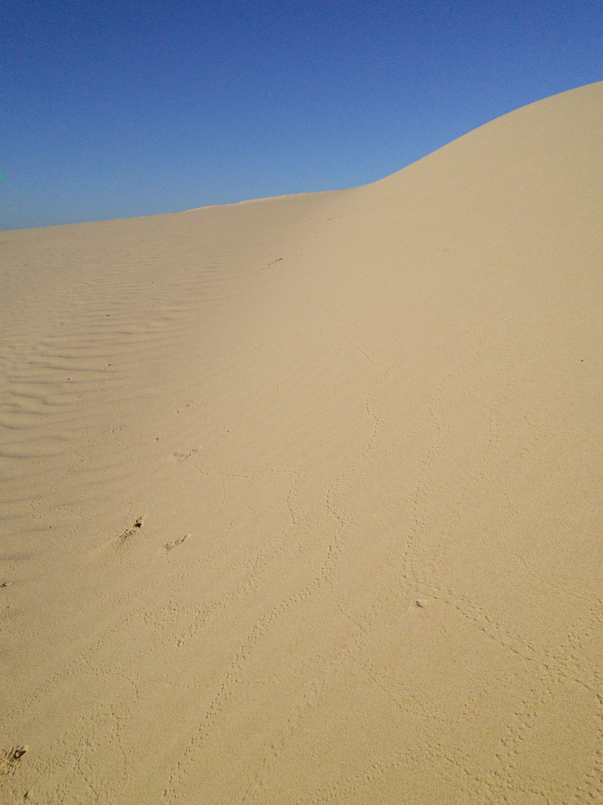 Bug tracks at Monahans SandHills State Park, TX