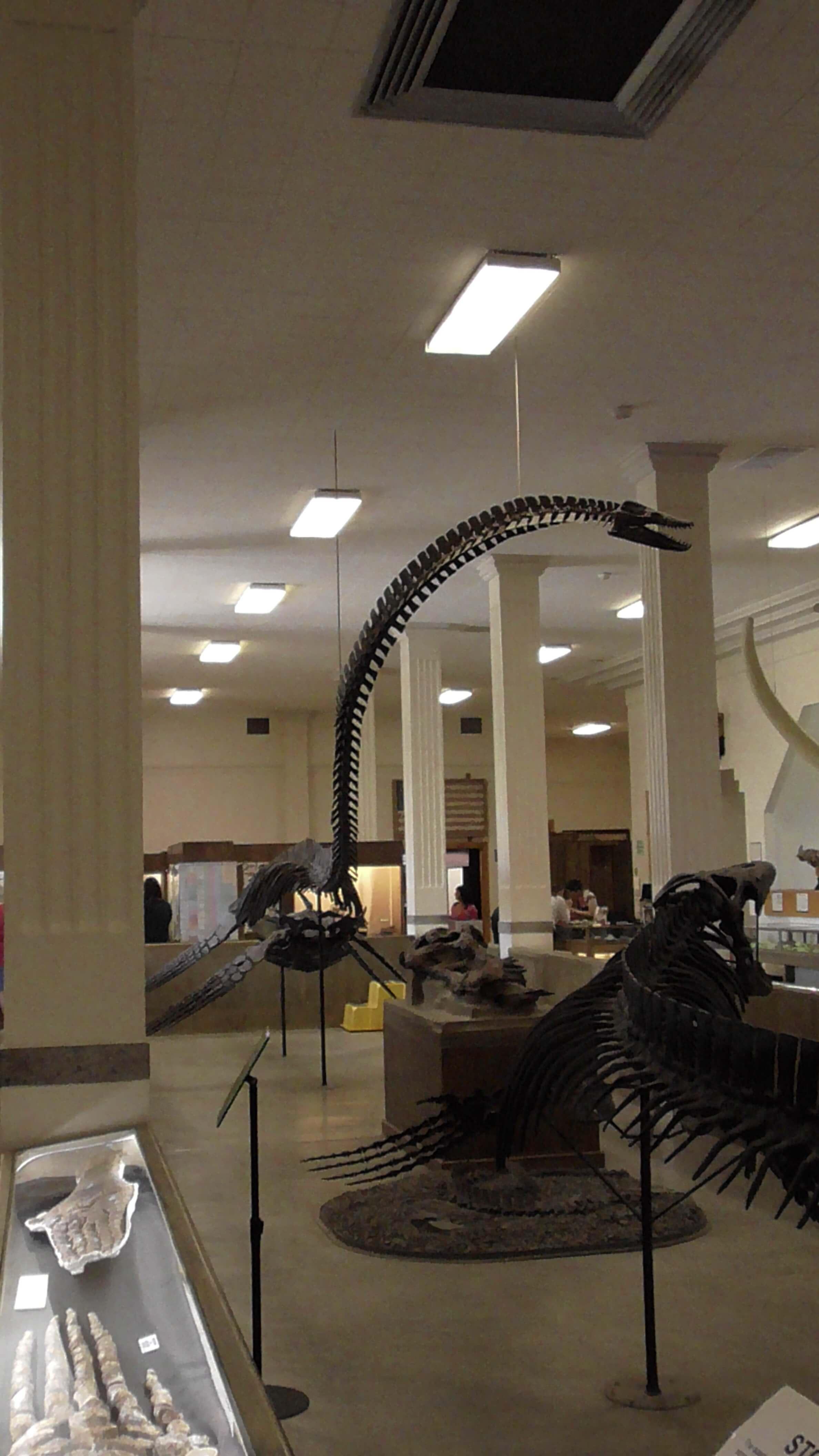 Pleiosaurus