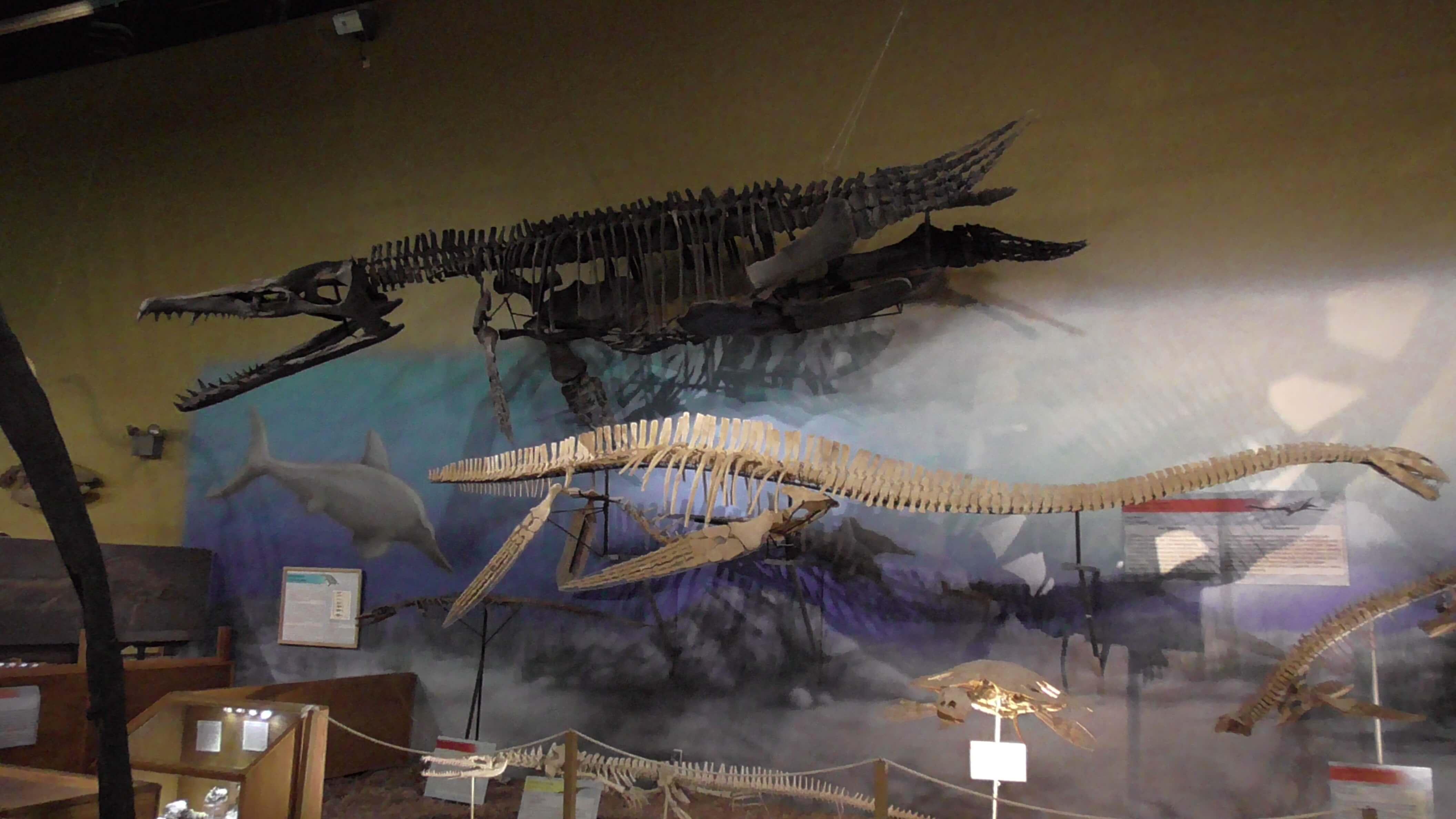 Mosasaur and elasmosaur