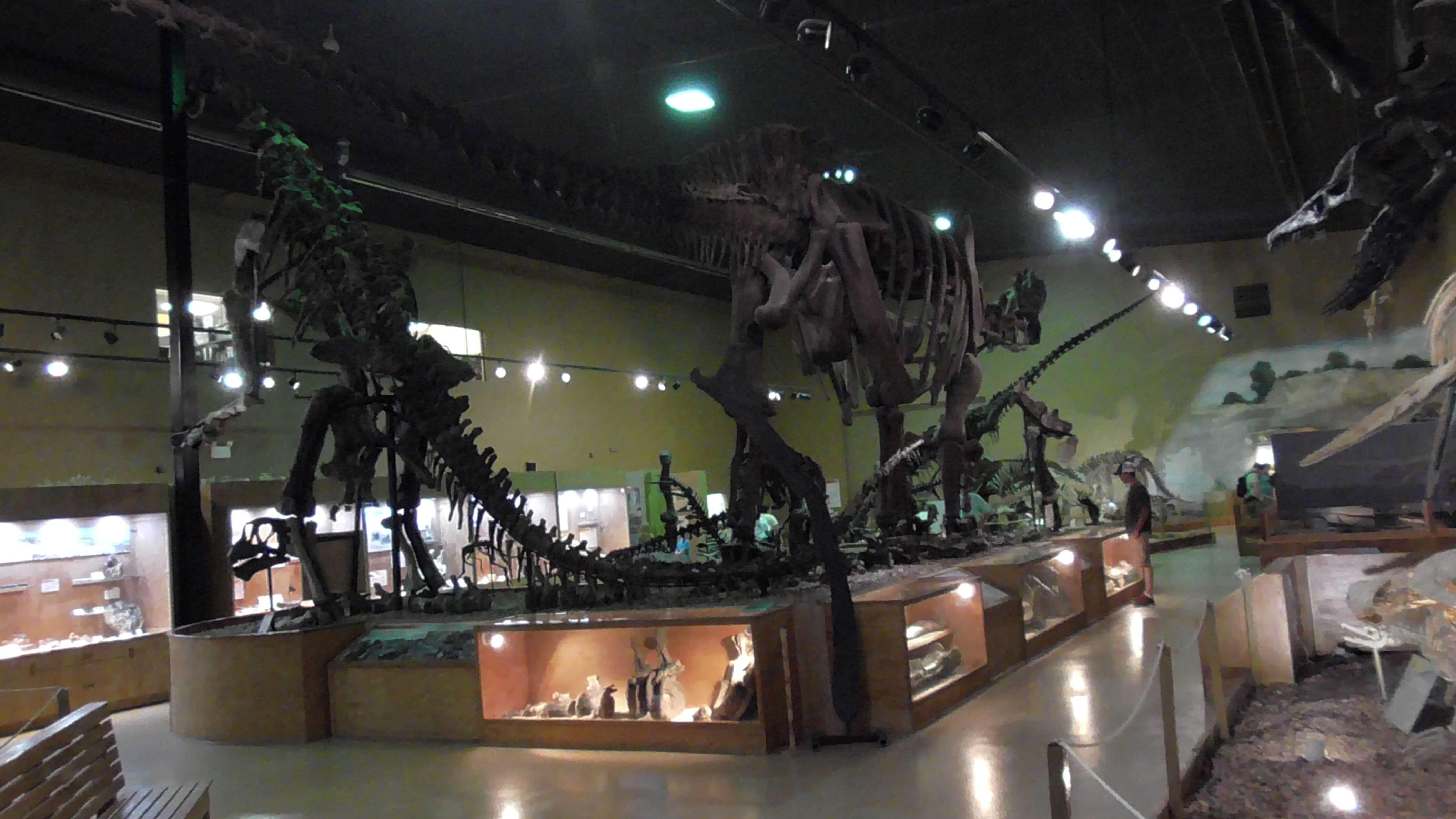 Supersaurus - 106 feet long