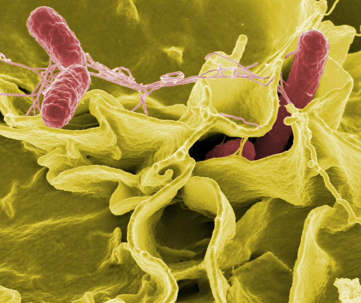 Bad Bacteria And How It Is Hurting Your Health