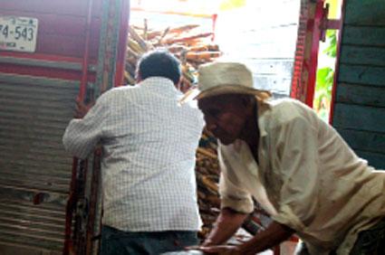 bringing-in-freshly-harvested-sugar-cane