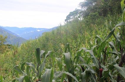 mountainside cane