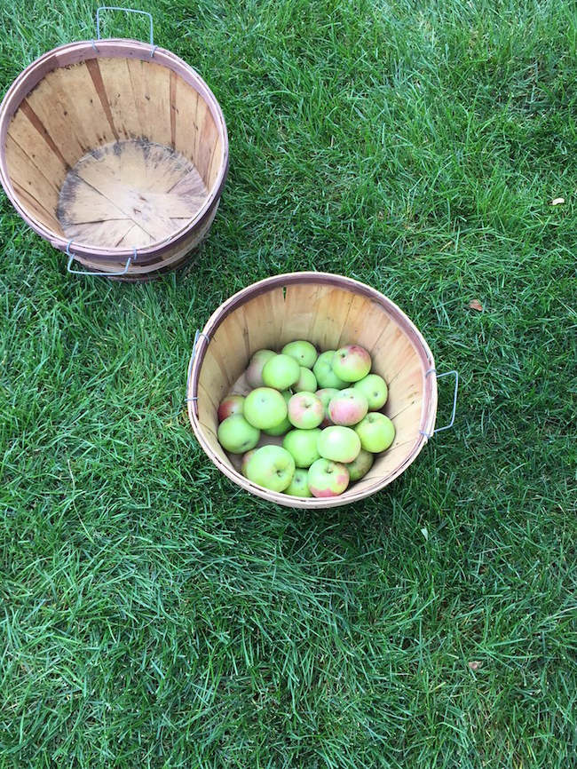 Apples from my tree