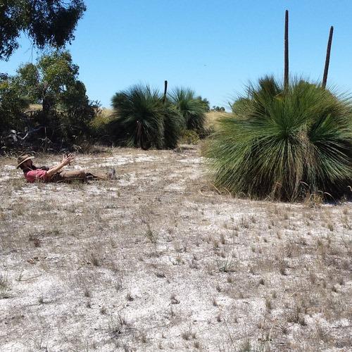 Rewilding Little Desert
