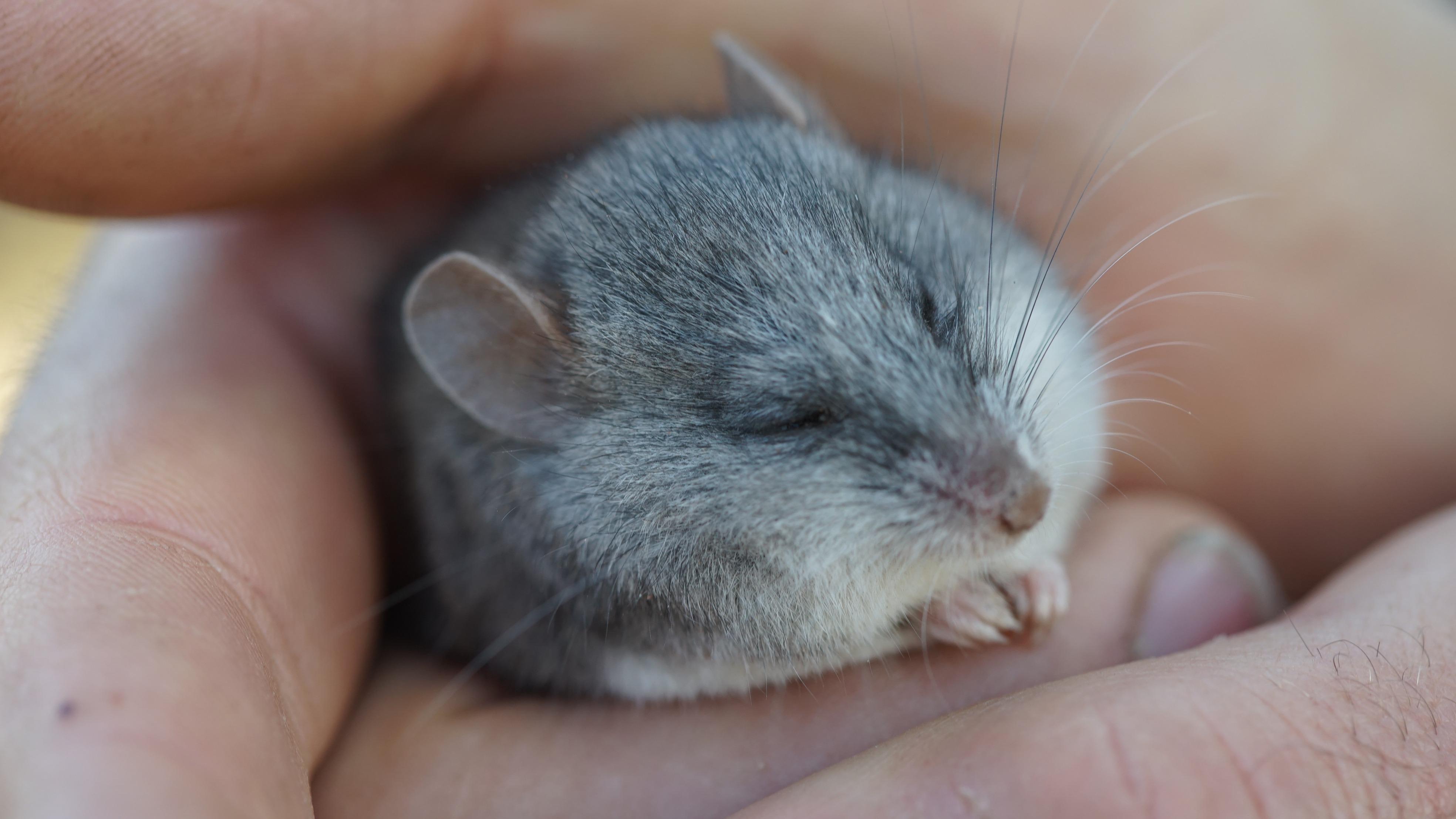 GALLERY: Rewilding Little Desert