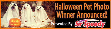 pet halloween
