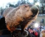 Celebrate Groundhog Day At Moraine