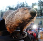 Celebrate Groundhog Day At Moraine