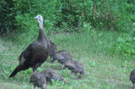 Spring Turkey Seasons Begins With Youth Turkey Hunt
