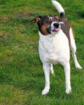 Officials Warn Of Online Dog License Scam