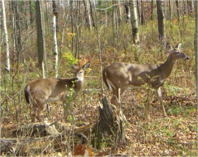 Game Commission Lists Proposed Dates For Sunday Hunting