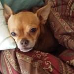 Dog elicits behavioral concerns in guardian