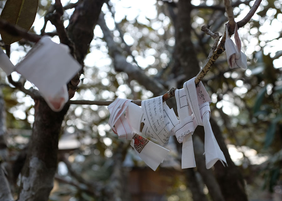 Fortunes tied to a tree outside Tamaki Shrine in Totsukawa Village