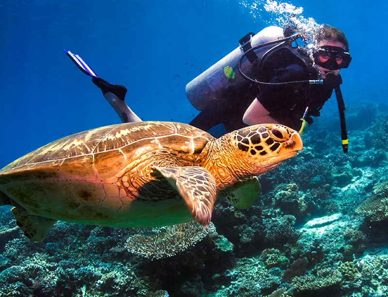 A hawksbill turtle. Credit: Adventure World Travel