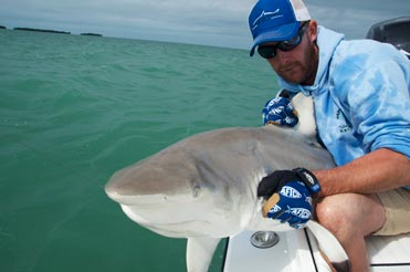 Black tip shark being released in the backcountry