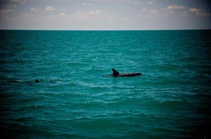 Dolphin watching in Key West