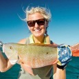 Mutton snapper at the reef