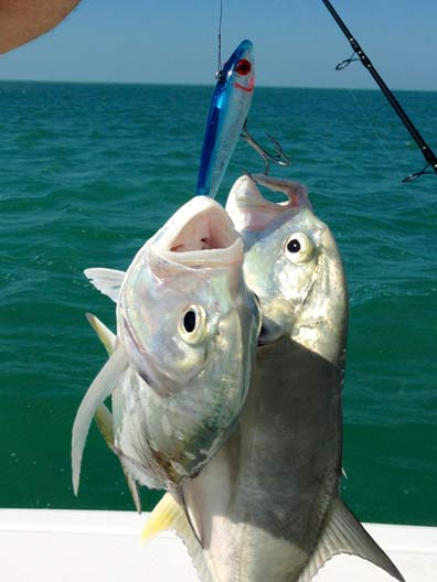 Two for one Jacks on a lure