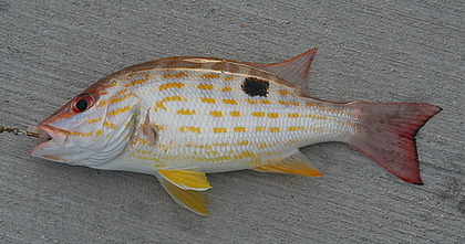 key west fish species