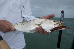 Winter time trout in Key West