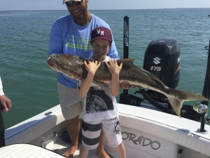 Cobia caught in the backcountry