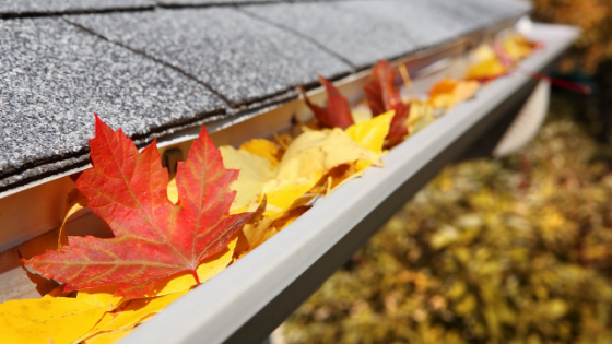 The Importance of Cleaning Your Rain Gutters
