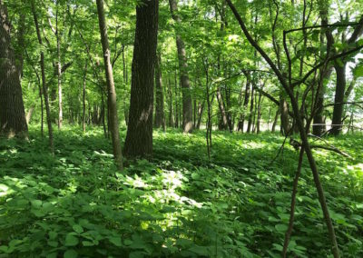 5 Acres For Sale | Wright County, Iowa | Huff Land Company