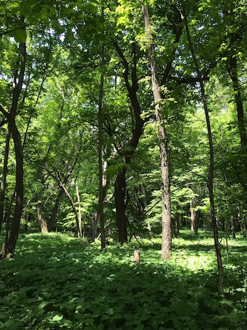 5 Acres For Sale   Wright County, Iowa   Huff Land Company