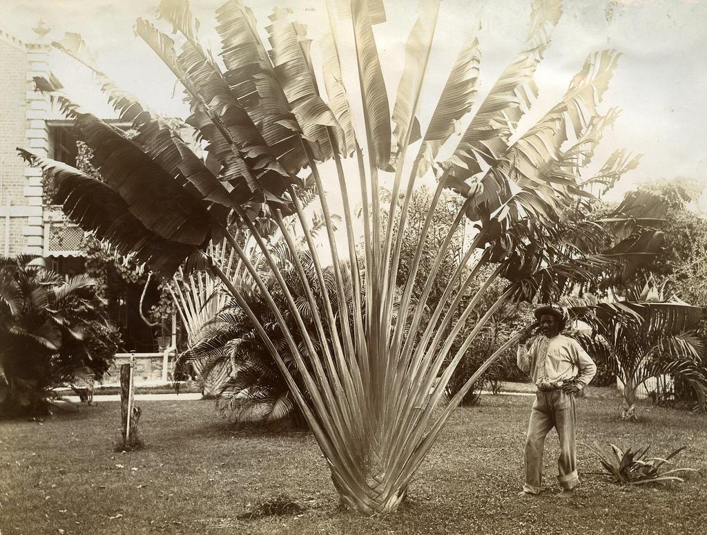 Jamaica before 1900 (31)