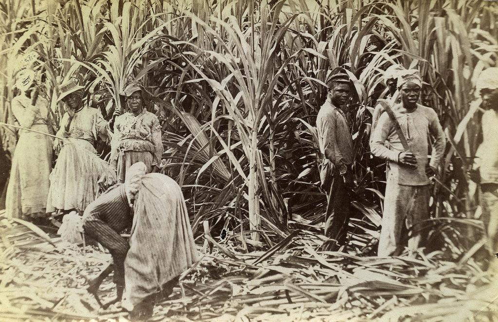 Jamaica before 1900 (5)