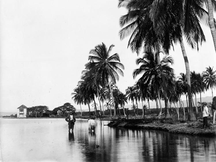Jamaica before 1900 (7)