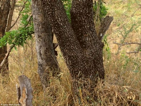 Which Animal Do You See? Most People Can't Find Them! 5