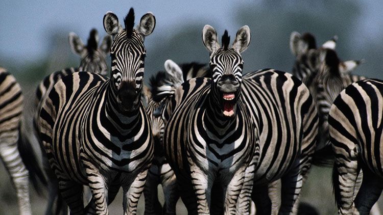 The First Animal You Spot Reveals Secrets About Your Personality 2