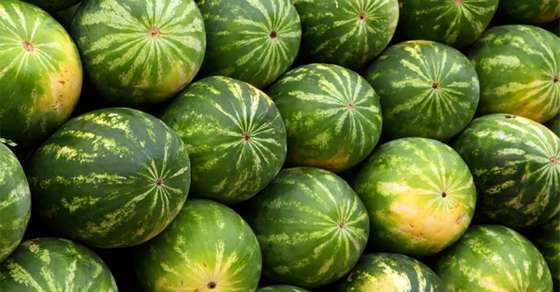 The Watermelon You Should Never, Ever Eat