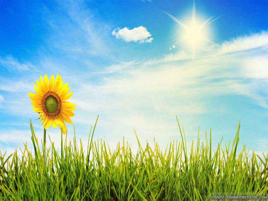 wonderful-summer-scenes-wallpapers-1024x768