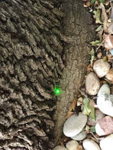 Jan. 2019 Park & Rio Grande Tree Removal