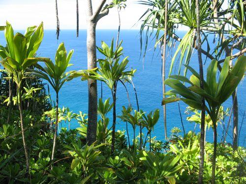 ocean-thru-plants