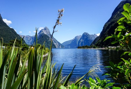 Sunny day on Milford Sound, looking out from the port.