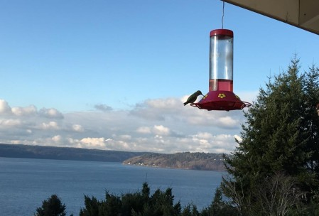 My dad has a bunch of hummingbirds. This is one of them.