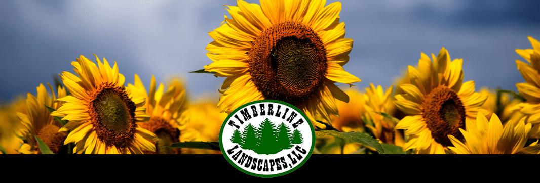 September 2019 – Newsletter Banner 1