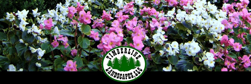 February 14 2020 Timberline Landscaping – Newsletter Banner
